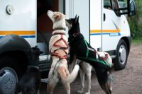 Dogs at motorhome